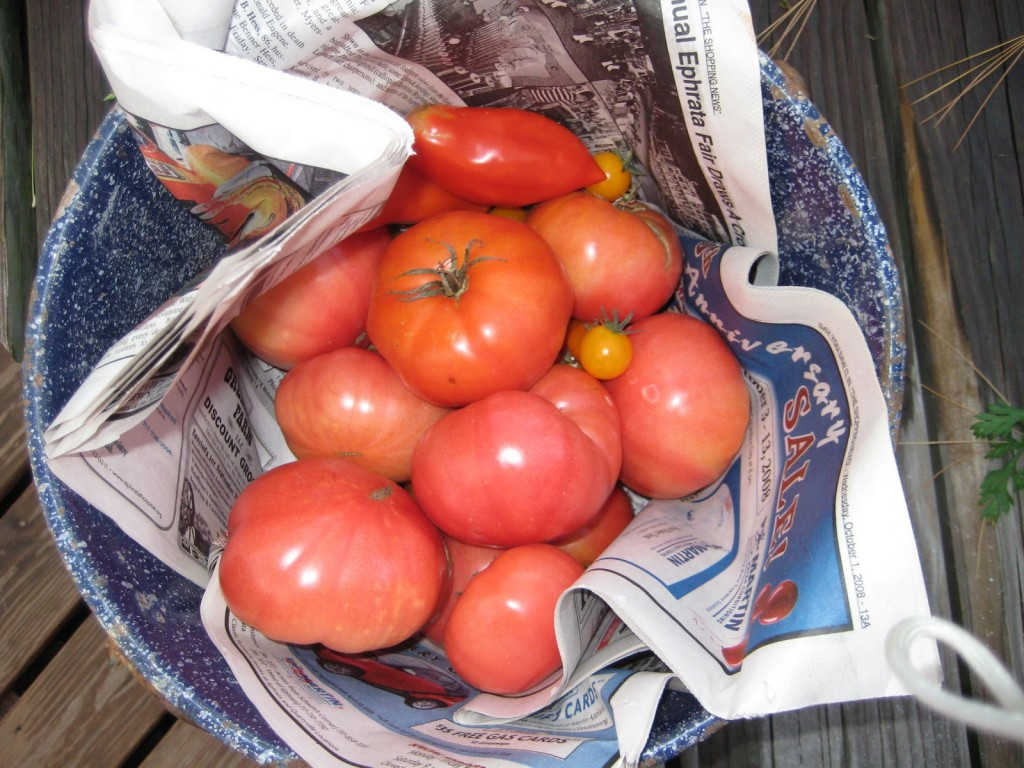 tomatoes & Landis Valley goodies