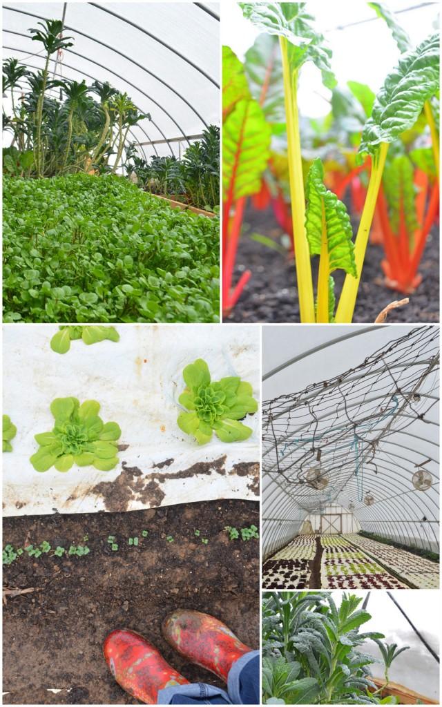 phoebe-groff-farm-